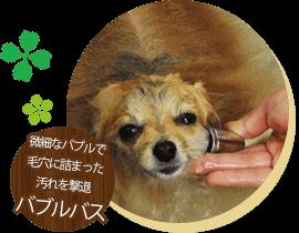 船橋市 犬のトリミングサロン バブルバス