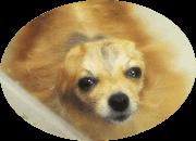 犬 トリミング 船橋市: