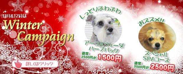 船橋市 犬のトリミングサロン 11月&12月Winter Campaign