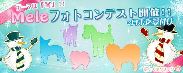 船橋市犬のトリミングサロンMele 2月のキャンペーン