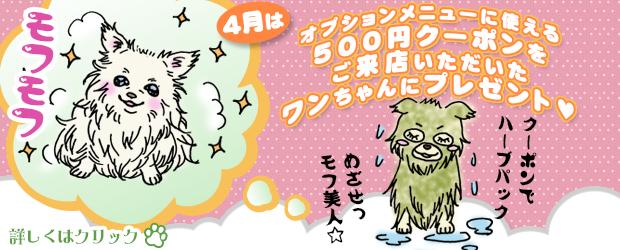 船橋市 犬のトリミングサロン 4月のキャンペーン