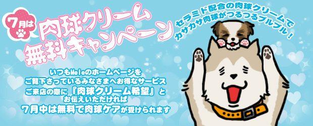 船橋市犬のトリミングサロンMELE :7月のキャンペーン