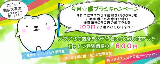 船橋市 犬のトリミングサロン Mele 歯ブラシキャンペーン