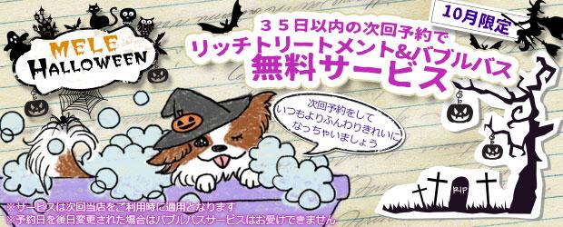 船橋市で犬のトリミング Mele 10月のキャンペーン