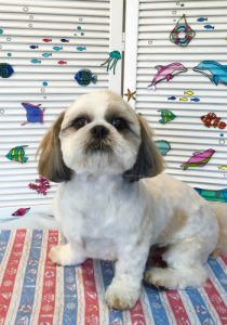 船橋市犬のトリミングサロン