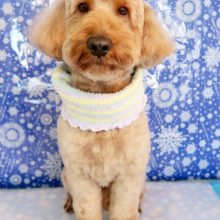 犬 トリミング 船橋市:船橋市犬のトリミングサロン