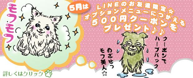犬 トリミング 船橋市:5月は LINEのお友達限定☆ オプションメニューにつかえる500円クーポンをプレゼント♪♪