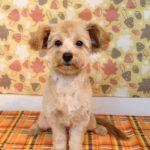 犬 トリミング 船橋市:犬 船橋 トリミングサロン ペットホテル