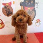 犬 八千代 船橋 ペットホテル トリミング