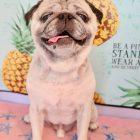 犬 トリミング 船橋市:犬 八千代 船橋 ペットホテル トリミング