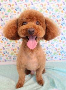 ペットホテル  トリミングサロン 犬