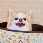 犬 船橋 ペットホテル トリミング